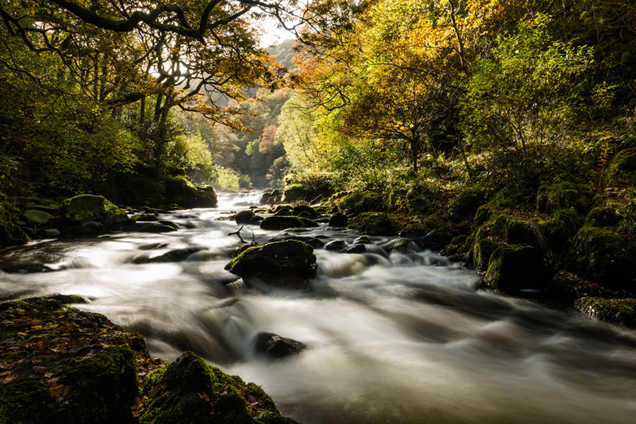 Stream on Exmoor